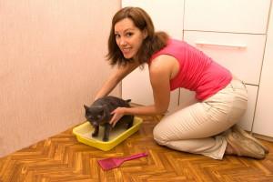 Кошка ходит в туалет на лоток