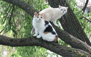кошки метят территорию