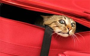 переезд для кошки