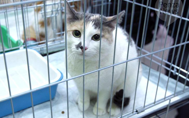 Беспородная выставка кошек