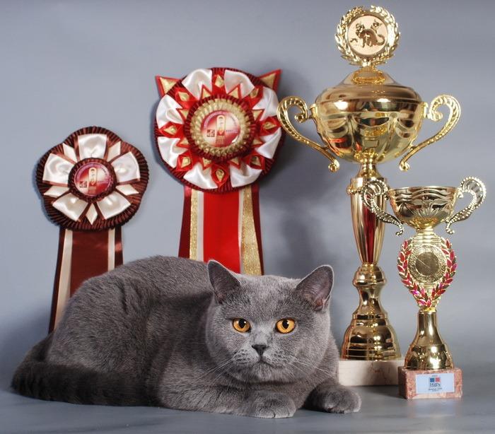 Какую кошку можно на выставку thumbnail