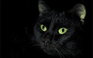 кошки видят в темноте