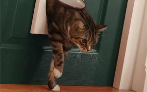 лаз для кошки