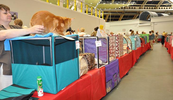 Выставка кошек в Москве