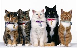 фото кошек и котят разных пород