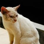 кот болен нотоэдрозом