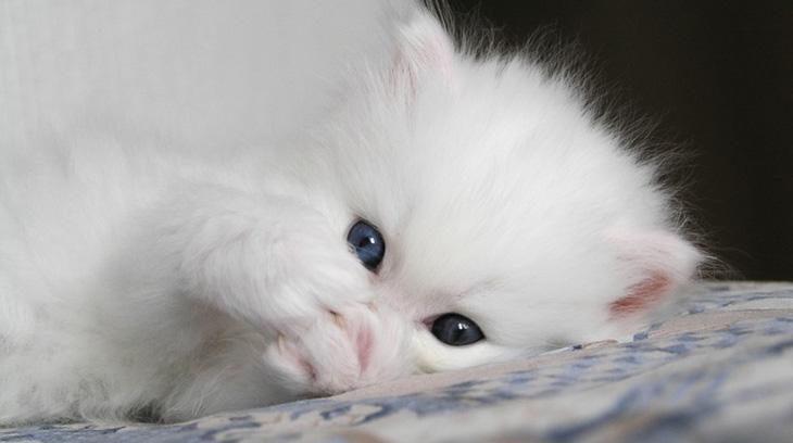 Как назвать белого котенка