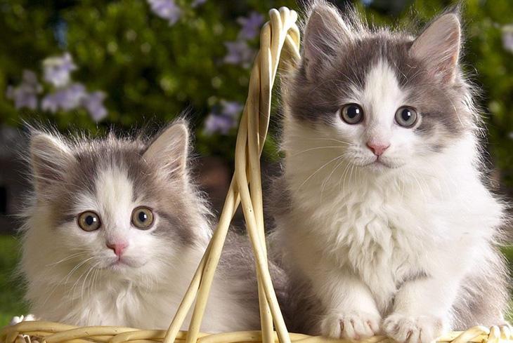 Как назвать двухцветного котенка