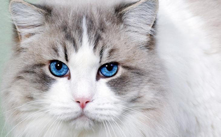 Как назвать голубоглазого котенка