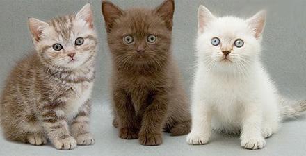 Как назвать котенка - мальчика или девочку