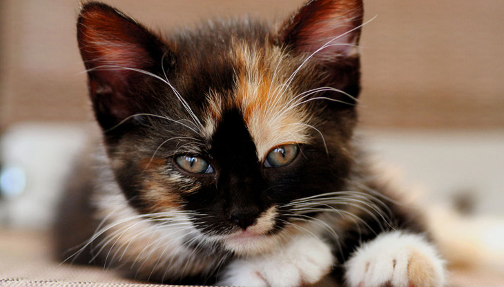 как назвать трехцветного котенка