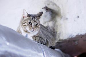 Эрмитажные котики