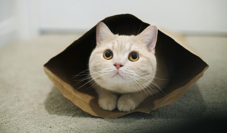 как назвать котика