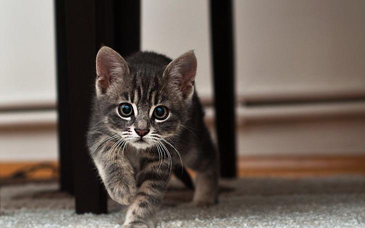 красивые кошачьи клички