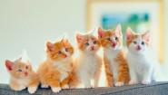 Какое красивое и интересное имя дать котенку